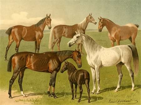 Horse Breeds I Digital Print by Volkers, Emil,Decorative
