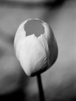Floral Portrait I Digital Print by Pica, Jeff,Decorative, Photorealism