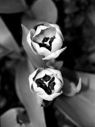 Floral Portrait IV Digital Print by Pica, Jeff,Decorative, Photorealism