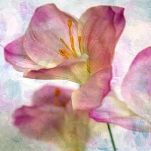 Pink Hyacinth I Digital Print by Malek, Honey,Decorative