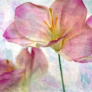 Pink Hyacinth II Digital Print by Malek, Honey,Decorative