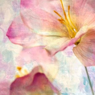 Pink Hyacinth V Digital Print by Malek, Honey,Decorative