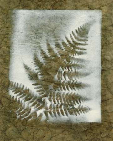 Shadows & Ferns I Digital Print by Stramel, Renee W.,Decorative