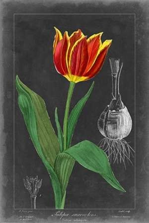 Midnight Tulip IV Digital Print by Vision Studio,Decorative