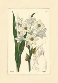 White Curtis Botanical I Digital Print by Vision Studio,Art Deco