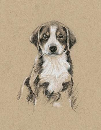 Breed Sketches II Digital Print by Harper, Ethan,Realism