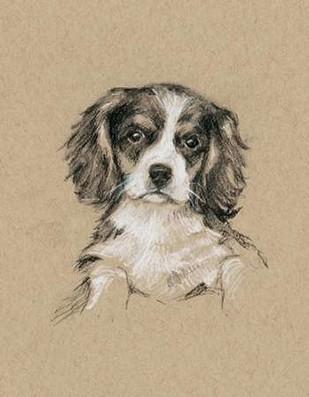 Breed Sketches III Digital Print by Harper, Ethan,Realism