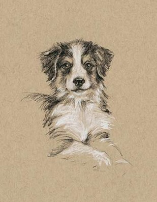 Breed Sketches IV Digital Print by Harper, Ethan,Realism