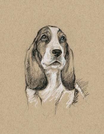 Breed Sketches VI Digital Print by Harper, Ethan,Illustration