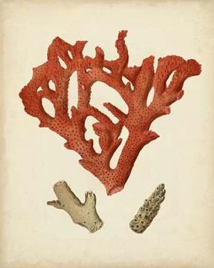 Antique Red Coral II Digital Print by Vision Studio,Realism