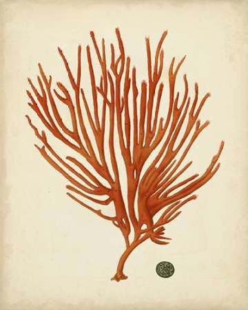 Antique Red Coral IV Digital Print by Vision Studio,Realism