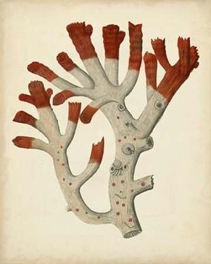 Antique Red Coral VI Digital Print by Vision Studio,Decorative