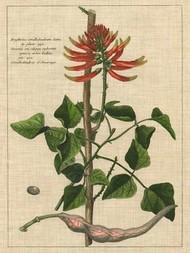 Botanical Study on Linen IV Digital Print by Vision Studio,Decorative