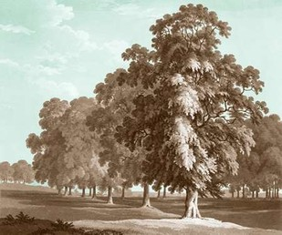 Serene Trees II Digital Print by Kennion, Edward,Realism