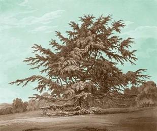 Serene Trees VI Digital Print by Kennion, Edward,Realism