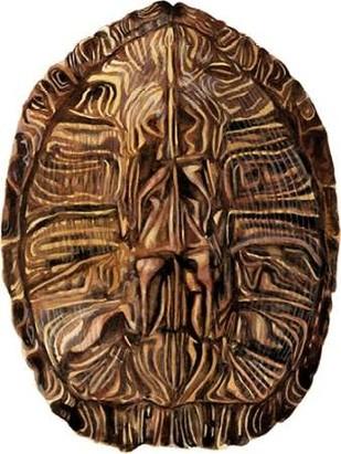 Tortoise Shell Detail II Digital Print by McCavitt, Naomi,Realism