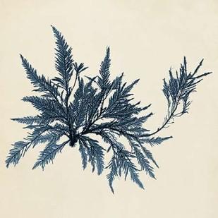 Coastal Seaweed VII Digital Print by Vision Studio,Decorative