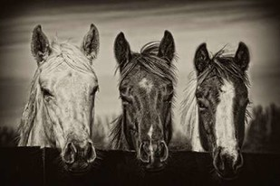 Three Amigos I Digital Print by PHBurchett,Illustration