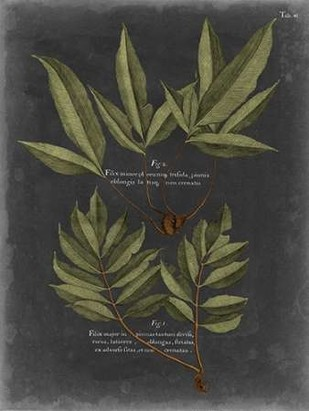 Foliage Dramatique IV Digital Print by Vision Studio,Decorative