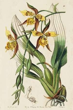 Spring Orchid I Digital Print by Ridgeway,Decorative