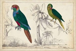 Parrot Pair I Digital Print by Unknown,Realism