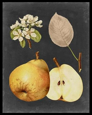 Midnight Harvest IV Digital Print by Vision Studio,Realism