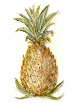Pineapple Sketch I Digital Print by Harper, Ethan,Decorative