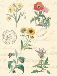 Botanical Journal IV Digital Print by Vision Studio,Decorative