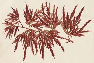 Japanese Maple Leaves IV Digital Print by Stroobant,Decorative
