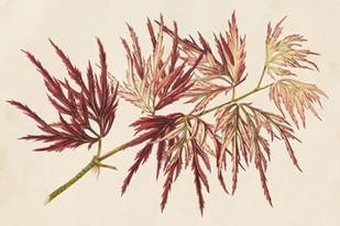 Japanese Maple Leaves V Digital Print by Stroobant,Decorative