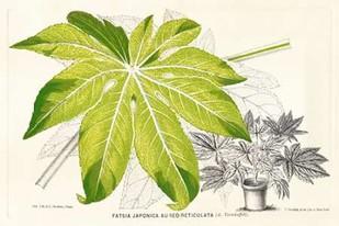 Fern Leaf Foliage I Digital Print by Stroobant,Decorative