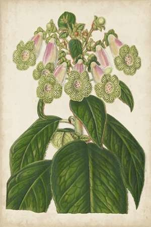 Foxglove Botanical Digital Print by Stroobant,Decorative