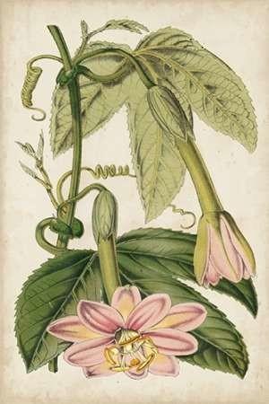 Passion Flower Botanical Digital Print by Stroobant,Decorative