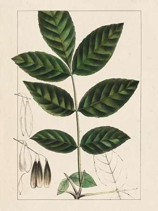 Silva Leaves I Digital Print by Silva, John,Decorative