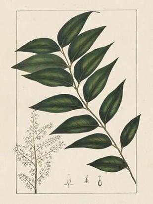 Silva Leaves III Digital Print by Silva, John,Decorative