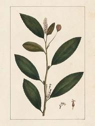 Silva Leaves V Digital Print by Silva, John,Decorative