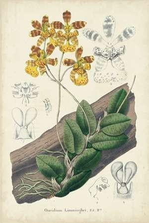 Orchid Delight I Digital Print by Severeyns, George,Impressionism