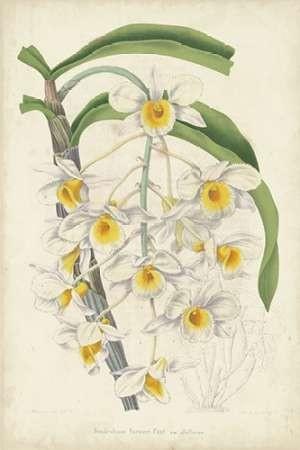 Orchid Delight III Digital Print by Severeyns, George,Realism