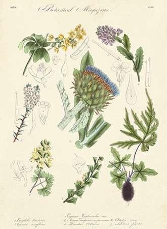 Botanical Register I Digital Print by Unknown,Realism