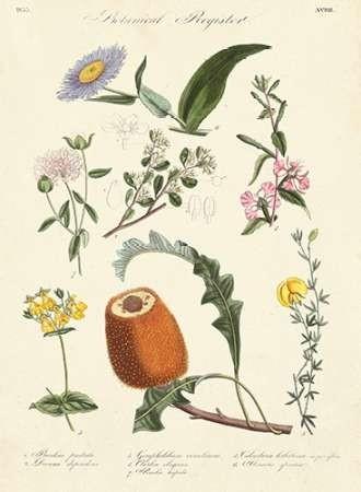 Botanical Register II Digital Print by Unknown,Realism