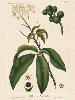 Round fruited Honeyberry Digital Print by Silva, John,Realism