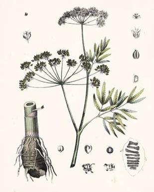 Berge Botanicals I Digital Print by Berge,Decorative