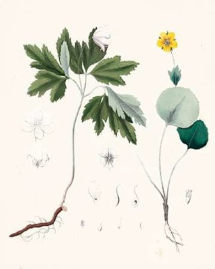 Berge Botanicals III Digital Print by Berge,Decorative