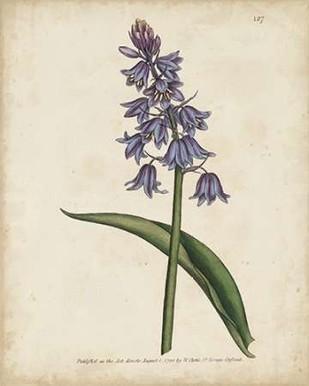 Lavender Curtis Botanicals II Digital Print by Curtis,Decorative