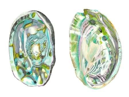 Abalone Shells II Digital Print by McCavitt, Naomi,Impressionism