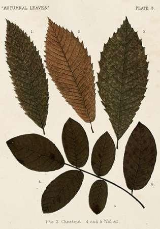 Autumnal Leaves I Digital Print by Vision Studio,Decorative
