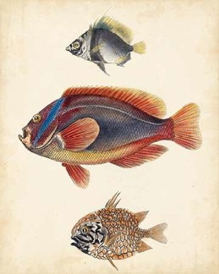 Antique Fish Species IV Digital Print by Unknown,Realism