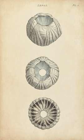 Cylindrical Shells I Digital Print by Wood,Realism