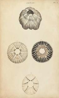 Cylindrical Shells II Digital Print by Wood,Realism