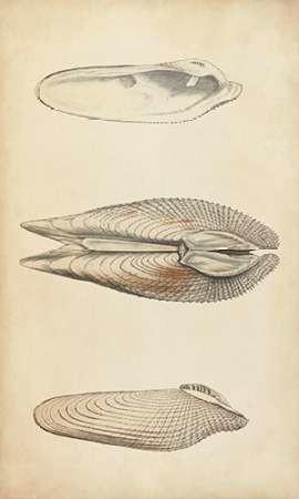 Marine Mollusk I Digital Print by Wood,Realism